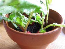 Gradina din casa: ce legume poti planta acum, pentru a fi bune de cules de Craciun