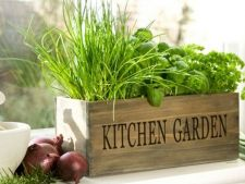 Make your own garden       aromatic plants even in kitchen