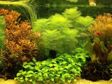 Superb decors with  , underwater plants awards in 2013