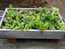 Recipiente simple si creative pentru gradina de salata