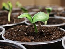 Ce legume poti semana in luna ianuarie