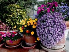 How to choose     in flower pots function plants