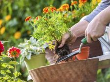How to care for     when plants get out in vacation