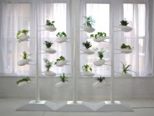 Hidroponia, amazing method of a increase plant of apartment no earth