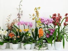 How do I stimulate a new     blossoming orchids