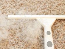 Parul de animale este greu de curatat? Iata cele mai bune ponturi pentru curatenia casei