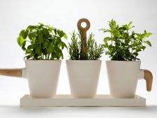 Pharmacy of  : pot planting your own    ! medicinal herbs