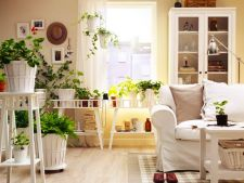 Creative ways the use of the   indoor plants