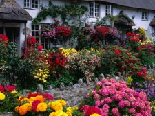 Trends in the in gardening 2014: 5   loving perennial plants of Sun