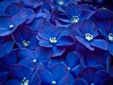 Tie you like flowers  ? Iata blue how are the  ! appeared