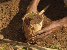 Ghivecele biodegradabile: cum le realizezi