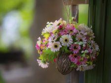 Ingrijirea plantelor agatatoare: 4 sfaturi utile
