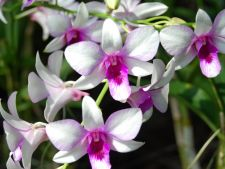 7 curiosity about Orchid be sure