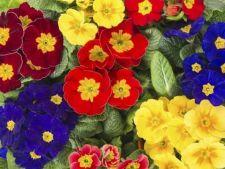 Flori uimitoare pentru o gradina spectaculoasa de primavara