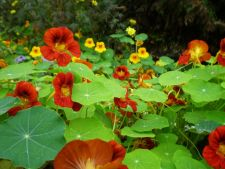 5 plant that survive in the harsh conditions