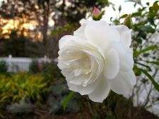 The may beautiful white flowers for the your garden spring