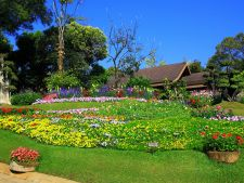 5 plant   to drought-resistant for the your garden summer