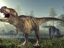 """A fost deslusit misterul """"manutelor"""" dinozaurului T. Rex!"""
