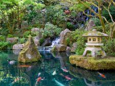 Uimitoarea Gradina Japoneza din Portland, locul pe care trebuie sa-l vizitezi