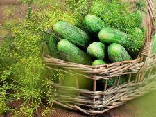 Invata sa cultivi castraveti deliciosi in gradina ta!