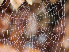 7 trucuri care vor tine paianjenii si tantarii departe de gradina ta