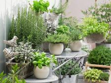 Garden with  . 5   aromatic plants on that you can cultivate home
