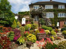6 flori perfecte pentru gradina ta. Iata cum trebuie sa le ingrijesti!