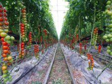 Cele mai aromate soiuri de tomate pe care le poti cultiva in gradina casei tale