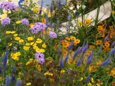 """How to   you  """"pictezi"""" garden in shades countries. Here 5 plant color in perennial powerful!"""