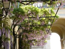 5 plant climbing for a garden of summer in the lush style