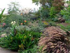 Cum sa acoperi gradina arida cu un covor verde exotic. Uite de ce ai nevoie!