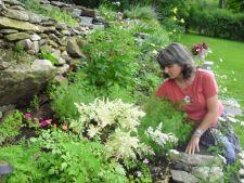 5 medicinal plants   for the Garden Pharmacy