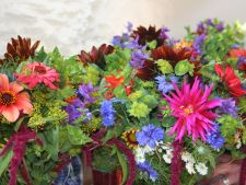 5 great   combinations of flowers for the your garden Look what plant can mate!