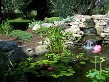 6 plant for the filter pond water your garden