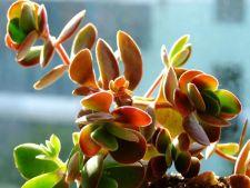 4 plante de apartament care nu se usuca atunci cand le neglijezi