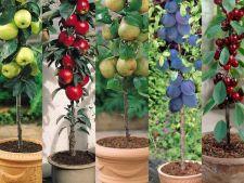 Pomii fructiferi la ghiveci, un mod util de gradinarit in spatii mici