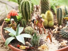 Garden for the your children. How to take West Wild in one pot!