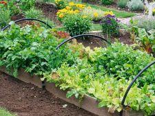 Tu ce cultivi toamna aceasta in gradina? 5 legume de toamna pentru orice gradinar priceput