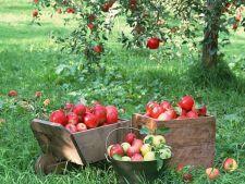 Care e momentul perfect pentru a culege fructele