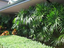 3  ,  -resistant plants easy of maintain