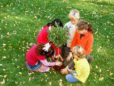 Toamna, sezonul ideal pentru plantarea pomilor fructiferi. Invata cum sa-i plantezi corect!