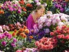 Planteaza dalii pentru o gradina plina de viata si culoare
