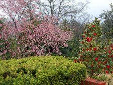 Flori de iarna. Invata sa aduci culoare in gradina in anotimpul rece!