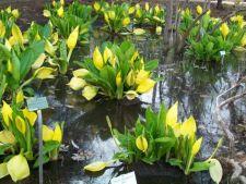 Top 5 cele mai urat mirositoare flori din lume. Ai indrazni sa le mirosi?