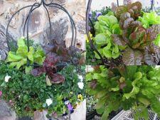 Cultiva legume si fructe in cosuri suspendate, pentru a te bucura de prospetimea lor intreaga iarna!