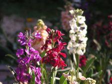5 flori parfumate perfecte pentru gradina ta. Iata ce trebuie sa plantezi la primavara!