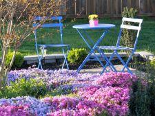 5 flori pe care le poti introduce in gradina ta. Uite ce poti planta din primavara!