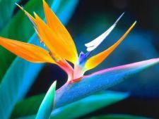 4 plante tropicale ideale pentru casa ta. Iata cat de usor le poti cultiva!