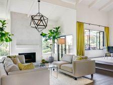 5 trucuri pentru ingrijirea corecta a smochinului ornamental din casa