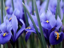 5 flori de primavara care nu trebuie sa lipseasca din gradina. E timpul sa le plantezi!
